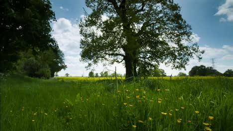 Hermoso-árbol-crudo-04