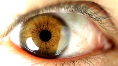 Big-Eye-Macro-02