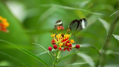 Butterfly-Macro-03