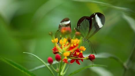 Butterfly-Macro-04
