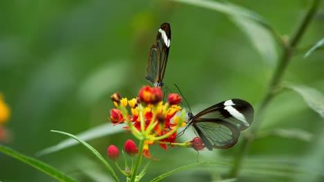 Butterfly-Macro-05
