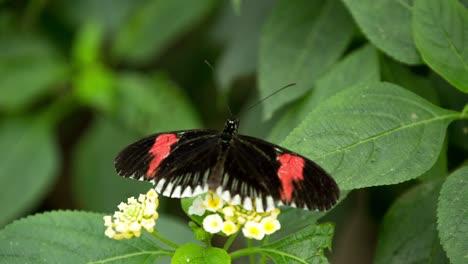 Butterfly-Macro-07