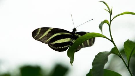 Butterfly-Macro-09