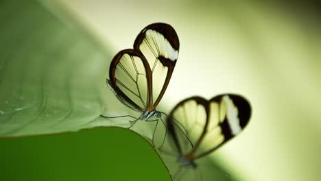 Butterfly-Macro-10