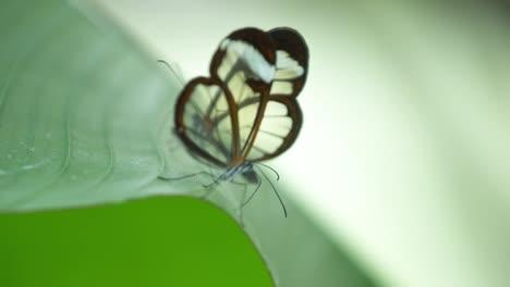 Butterfly-Macro-11