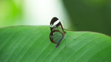Butterfly-Macro-12