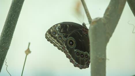 Butterfly-Macro-13