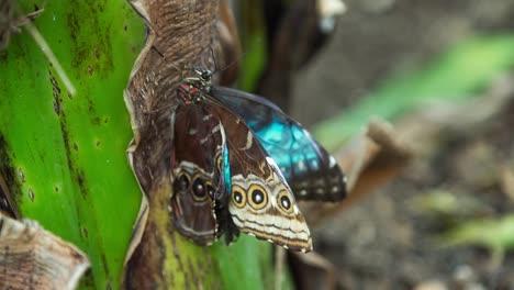 Butterfly-Macro-14