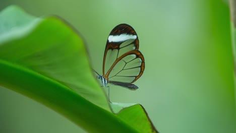 Butterfly-Macro-15