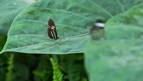 Butterfly-Macro-16