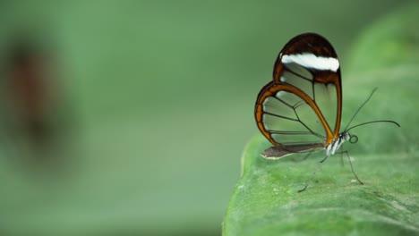 Butterfly-Macro-17