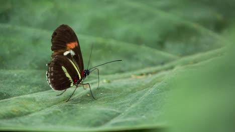 Butterfly-Macro-18