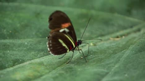 Butterfly-Macro-19