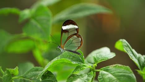 Butterfly-Macro-20