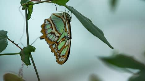 Butterfly-Macro-21
