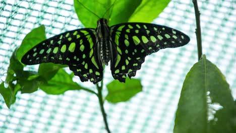 Butterfly-Macro-22