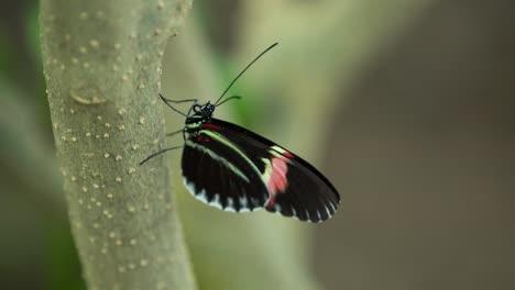 Butterfly-Macro-23