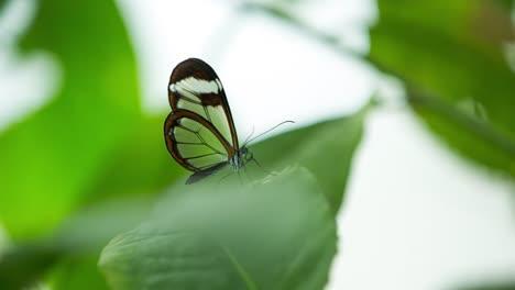 Butterfly-Macro-24