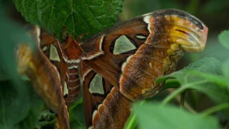 Butterfly-Macro-25