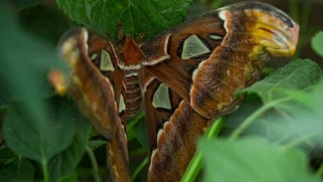 Butterfly-Macro-26