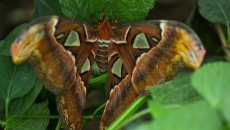 Butterfly-Macro-27
