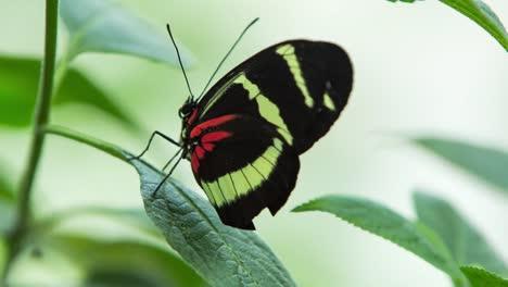 Butterfly-Macro-28