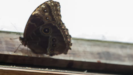 Butterfly-Macro-30