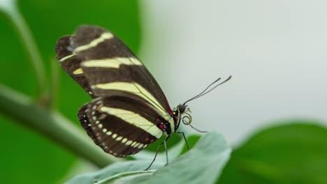 Butterfly-Macro-31