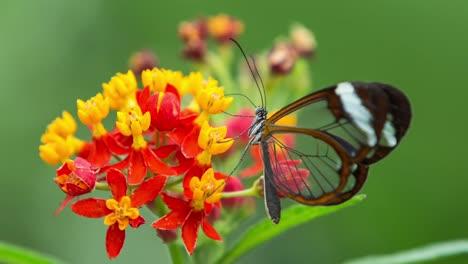 Butterfly-Macro-32
