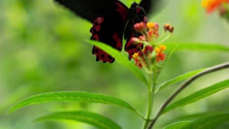 Butterfly-Macro-33