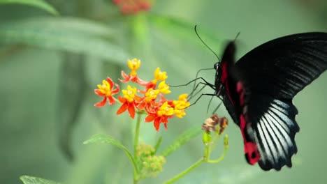 Butterfly-Macro-34