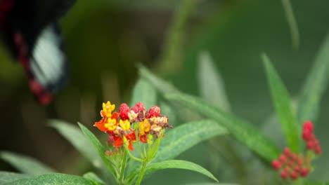 Butterfly-Macro-35