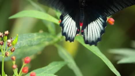 Butterfly-Macro-36
