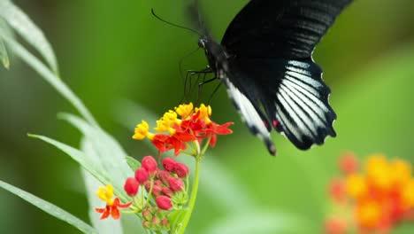 Butterfly-Macro-37