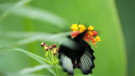 Butterfly-Macro-38