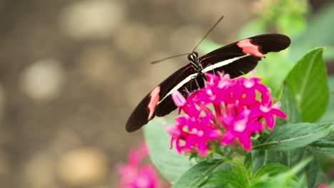Butterfly-Macro-39