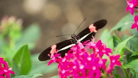 Butterfly-Macro-40