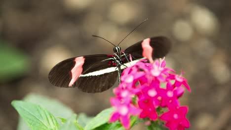 Butterfly-Macro-41