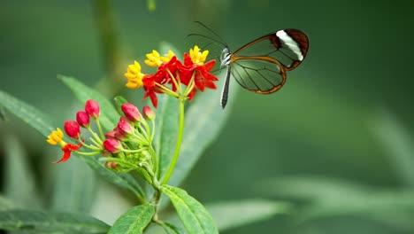 Butterfly-Macro-43