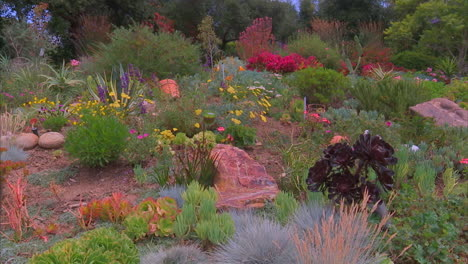 Californians-Are-Asked-To-Plant-Drought-Tolerant-Plants-In-Their-Yards-During-Drought