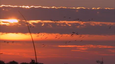 Californias-Delta-Region-Near-Sacramento-Is-An-Important-Wetland-Breeding-Ground-For-Birds-1