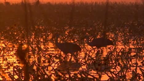 Californias-Delta-Region-Near-Sacramento-Is-An-Important-Wetland-Breeding-Ground-For-Birds-2