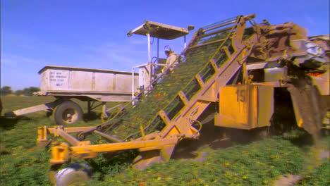 California-Farmers-Grow-Crops-In-The-San-Joaquin-Delta
