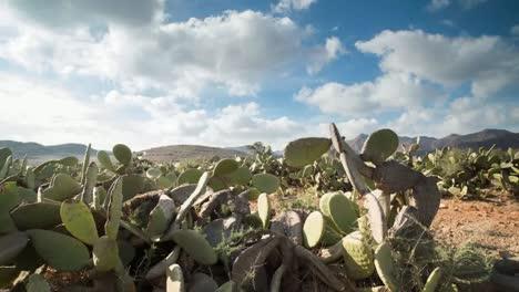 Cactus-Timelapse-02
