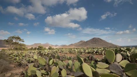Cactus-Timelapse-05