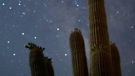 Cactus-Starlapse3
