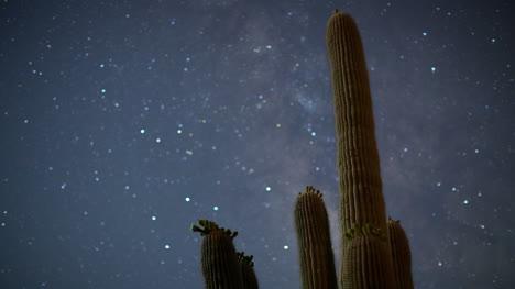 Cactus-Starlapse