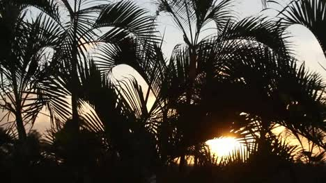 Cancun-Palms-Sunset-3