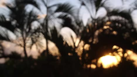 Cancun-Palms-Sunset-4