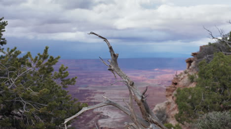 Canyonlands-Branch0